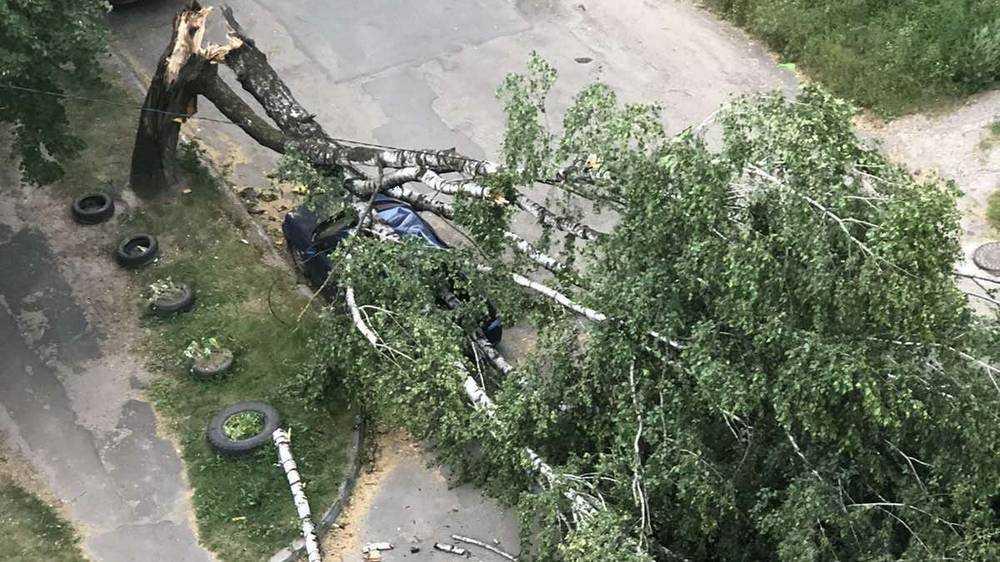 Ураганный ветер натворил немало бед в Брянске