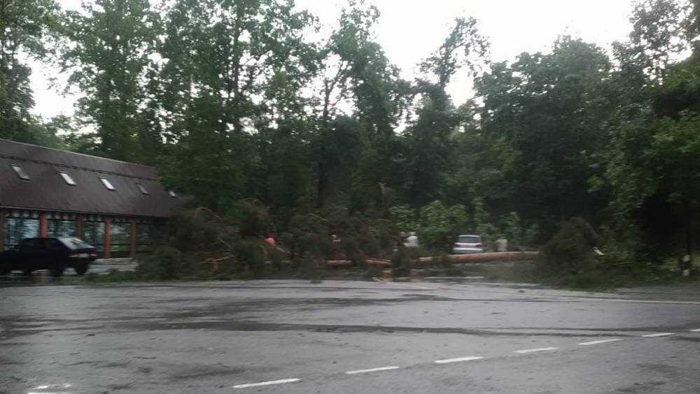 Ураган повалил 14 больших деревьев на брянской Партизанской поляне