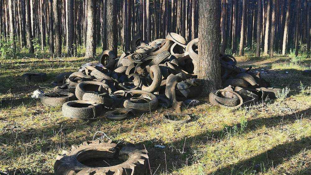 В лес под Брянском вывезли гору старых шин