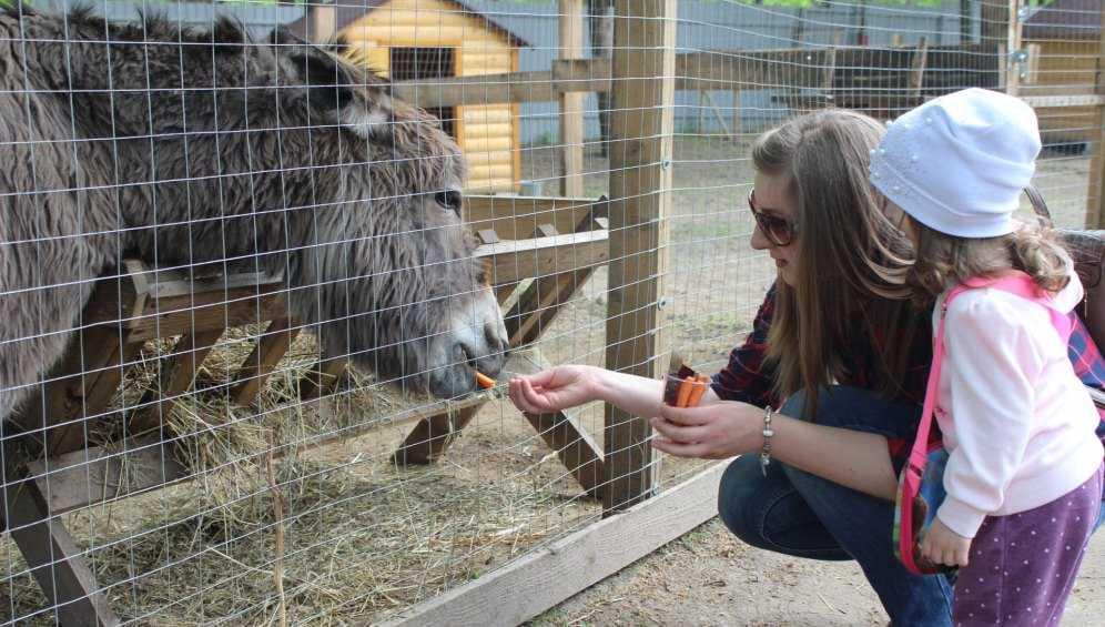 В Брянске возобновил работу зоопарк на Кургане Бессмертия