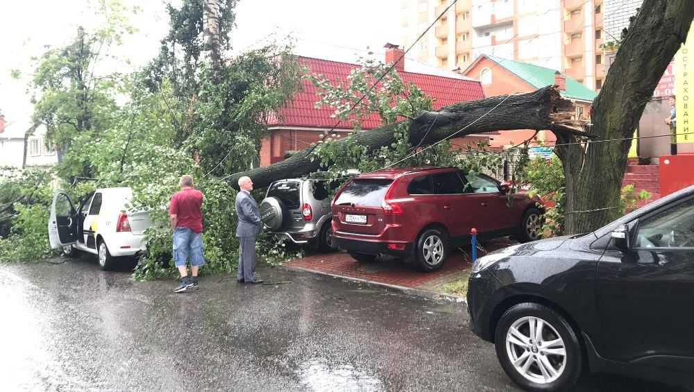 В Брянске на двух улицах на припаркованные автомобили упали деревья