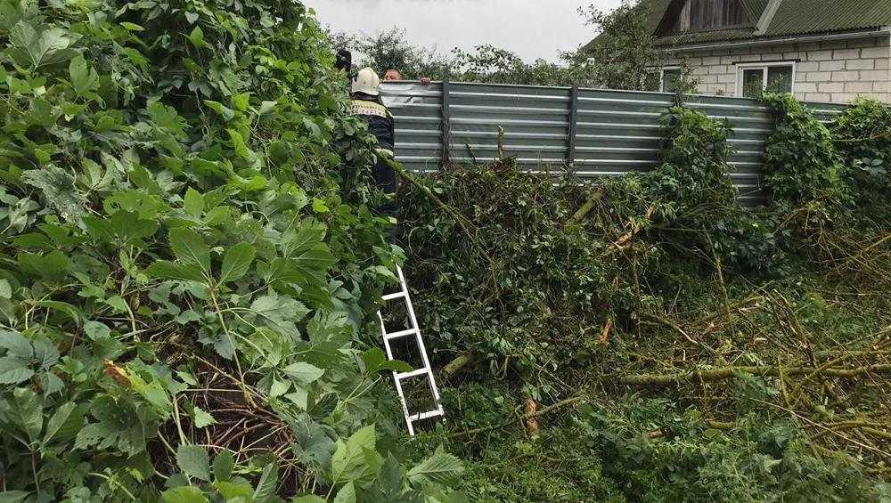 В Стародубе упавшее дерево придавило руку 15-летнему подростку