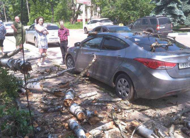 В Клинцах чиновников накажут из-за упавшего на автомобиль дерева