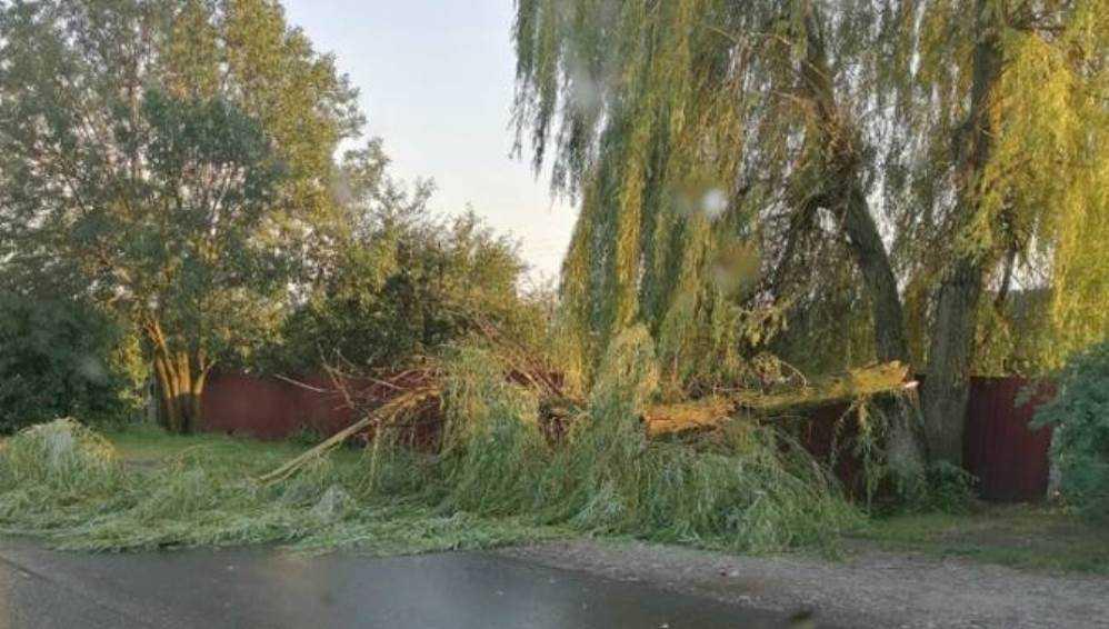 В Навле рассказали о потопе после ливня и рухнувшем на дорогу дереве