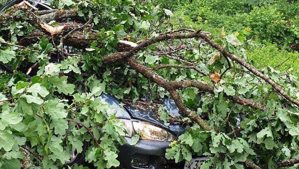 В брянском поселке Белые Берега упавшие деревья раздавили автомобиль