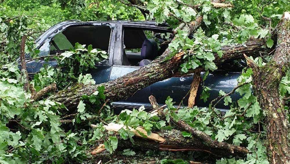 В Белых Берегах рухнувшее дерево погребло автомобиль под ветками