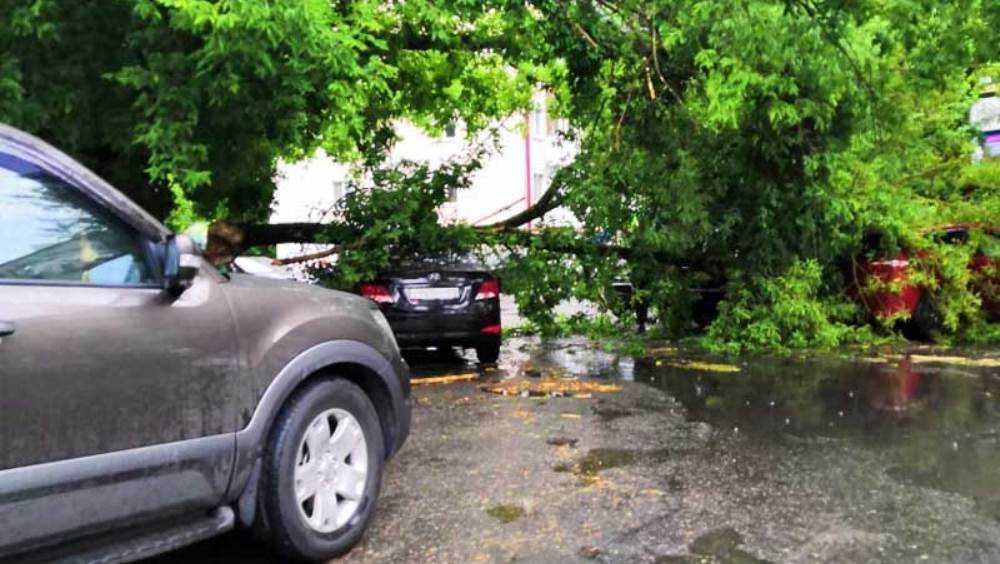 В центре Брянска упавшее дерево повредило три автомобиля