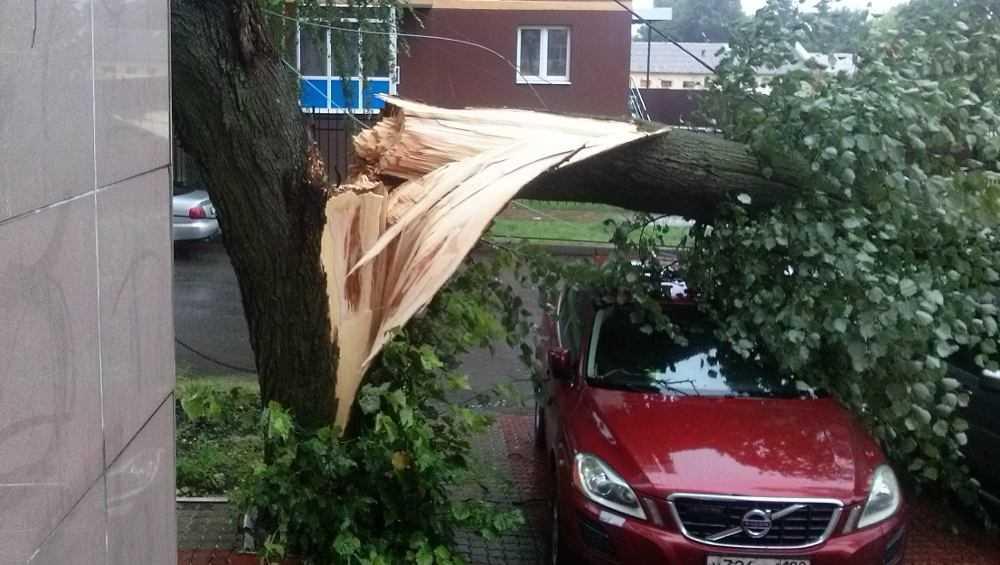 В Брянске на улице Ромашина на дорогу рухнуло дерево