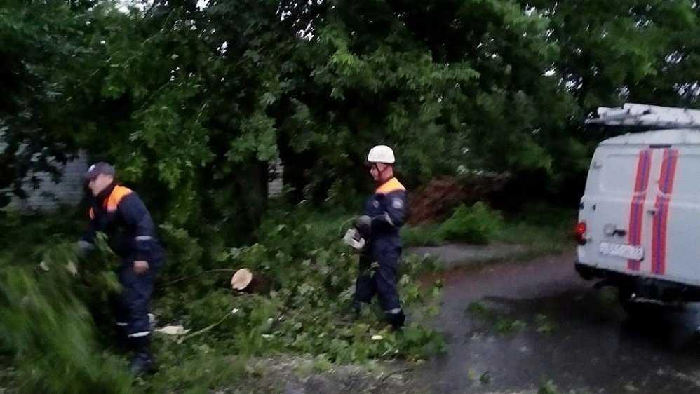 В Брянске во время ливня сильный ветер повалил восемь деревьев