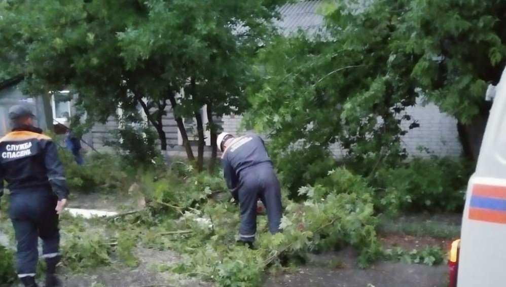 В двух районах Брянска ураганный ветер повалил четыре дерева