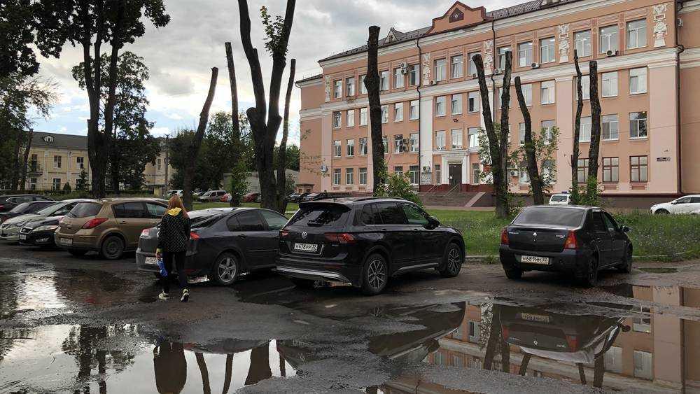 В Брянске расскажут о большом вреде кронирования деревьев