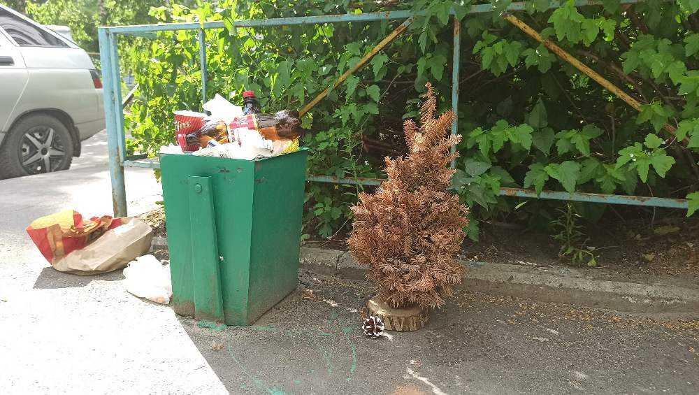 Брянцы посмеялись над выброшенной в середине лета новогодней елкой
