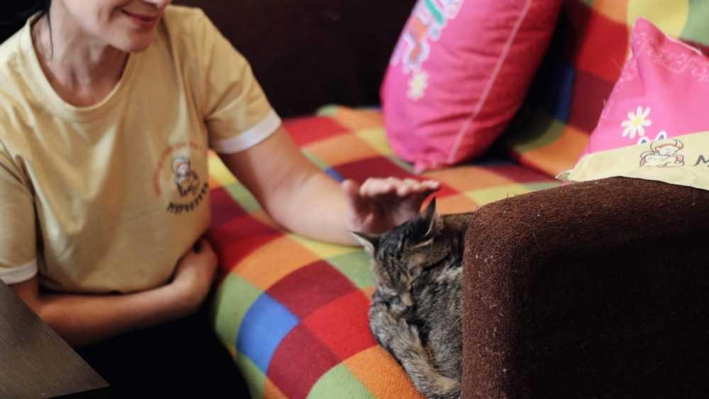 Безопасная и надежная передержка кошек