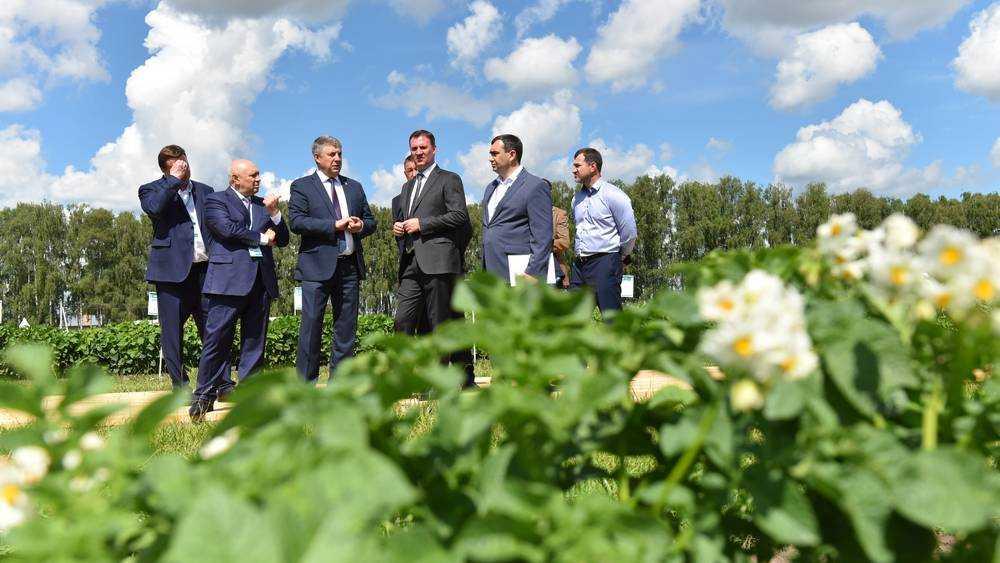 Больше, чем в Белоруссии: Патрушев похвалил брянцев за урожай картошки