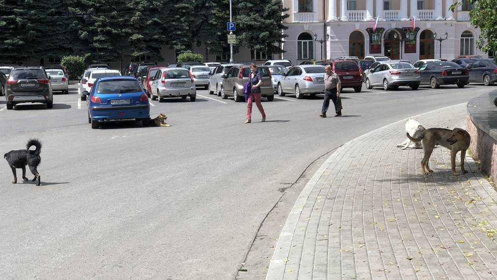 За трех растерзанных псами женщин ответит лишь один брянский чиновник