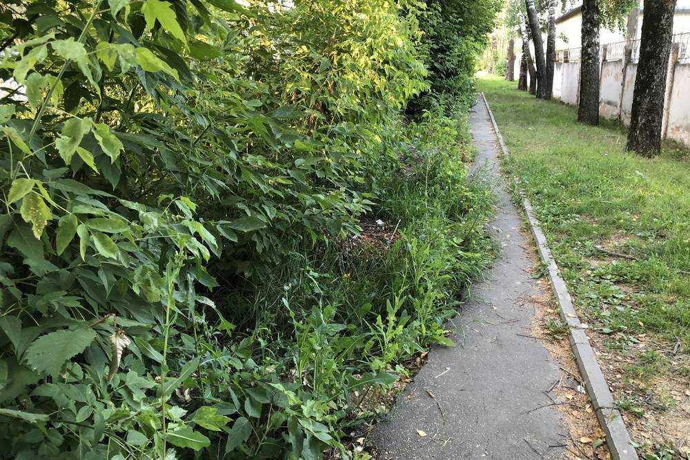 Самый зеленый и невостребованный тротуар Брянска