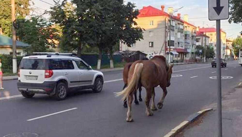 Лошади перекрыли дорогу в Володарском районе Брянска