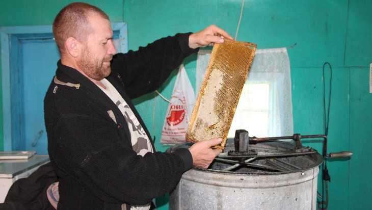 Пчелы в Брянской области стали вести себя странно