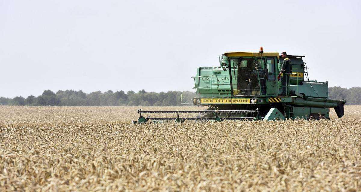 В Брянской области намолотили 1,455 млн тонн зерна