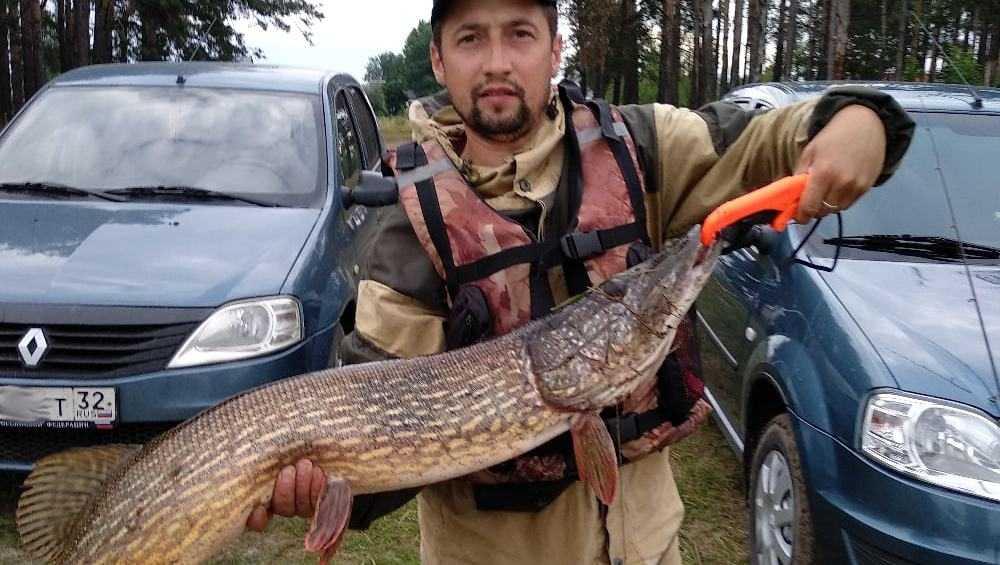 Брянский рыбак поймал в Орлике крупную щуку