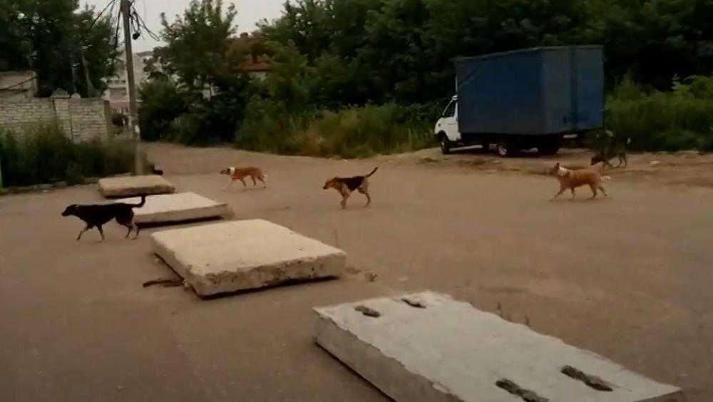 В центре Брянска сняли видео «собачьего беспредела»