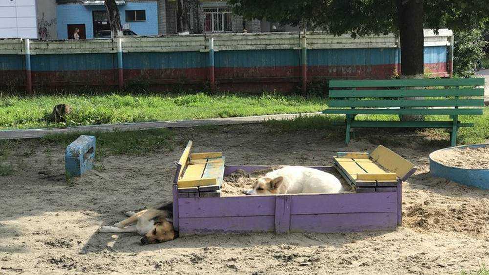 В Брянске собаки покусали детей на площадках