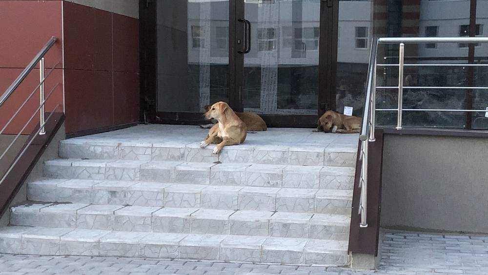 Мэр Брянска пообещал избавить город от бродячих собак