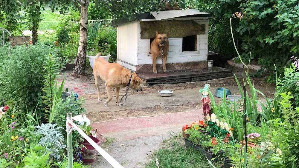 В Брянске псарню со злыми собаками замаскировали под оранжерею