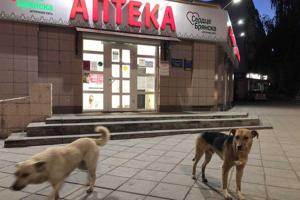 Приметы Брянска − аптеки и собаки