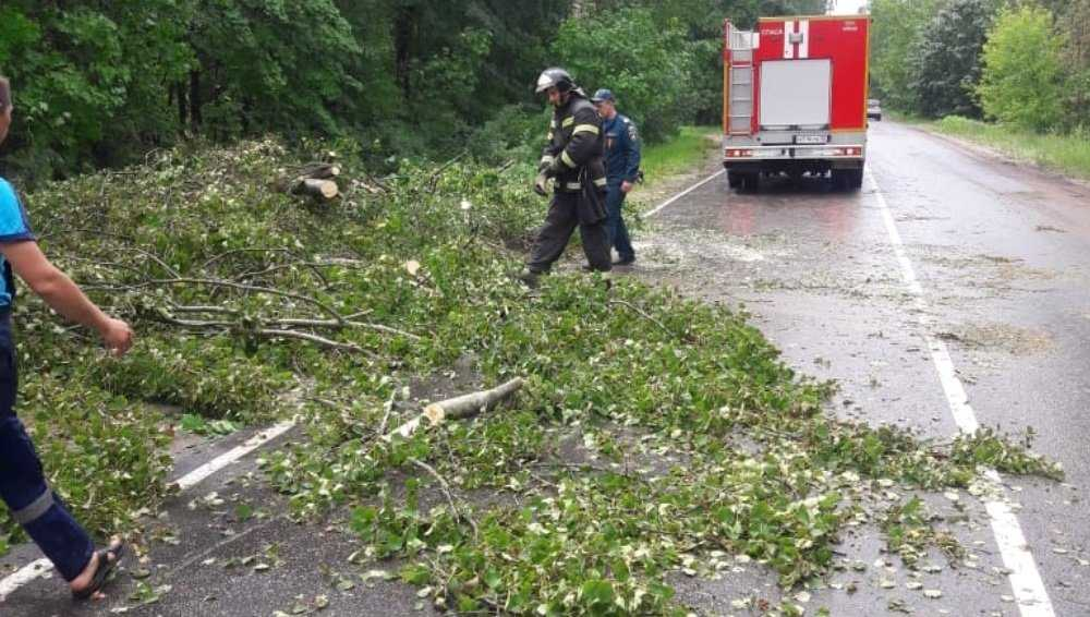 Ураганный ветер повалил в Брянске 25 деревьев