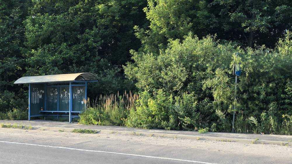 В Брянске буйная растительность поглотила дорожные знаки