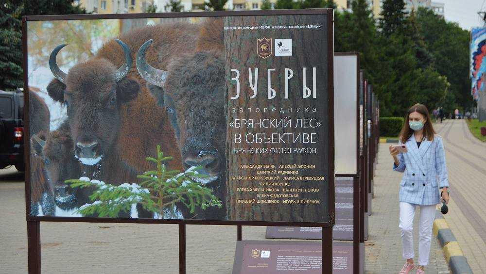 В Брянске на площади Партизан выставили фотографии зубров