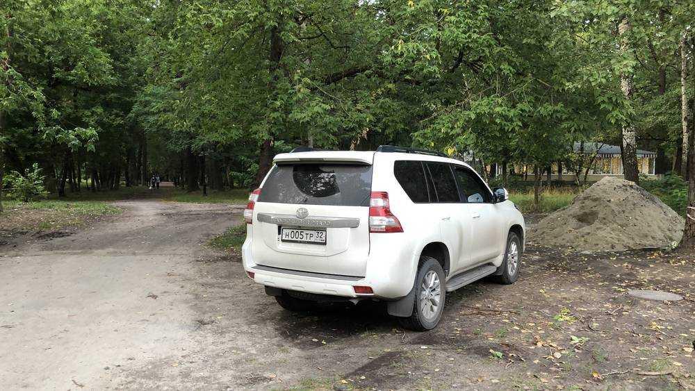 Господин 005 облюбовал Пушкинский парк Брянска