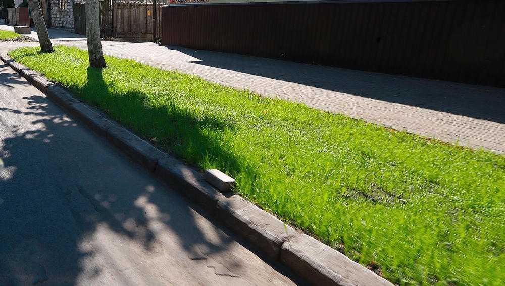 В Брянске высадили специальный устойчивый газон