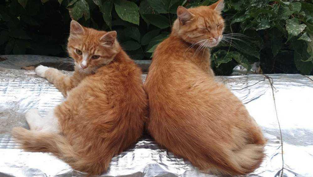 Брянские коты с обычной упаковки молока умилили Японию