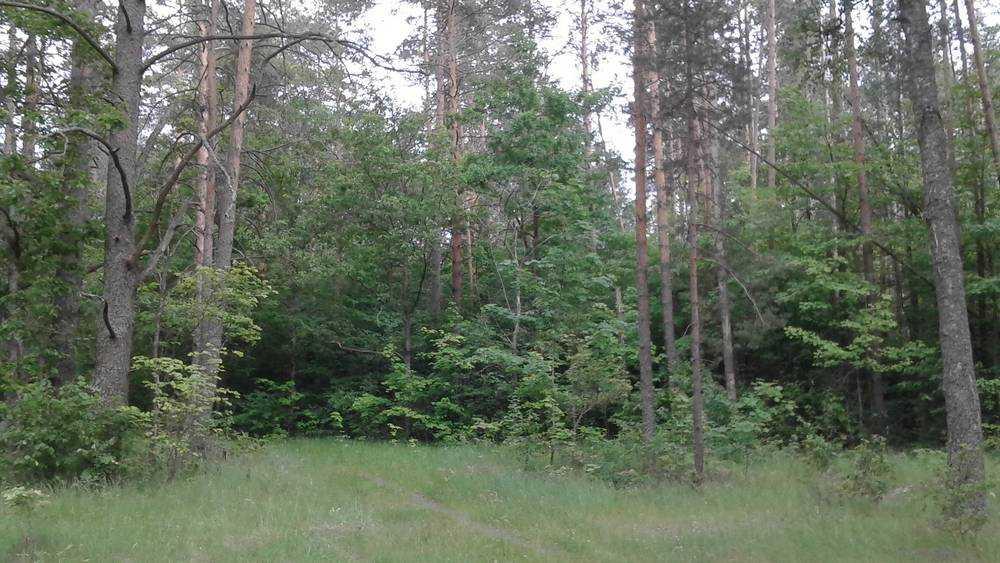 В лесу под Клинцами молодой мужчина напал на 17-летнюю девушку