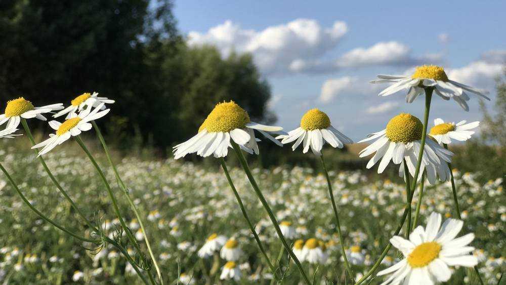 В Брянской области после потепления снова похолодает до 15 градусов