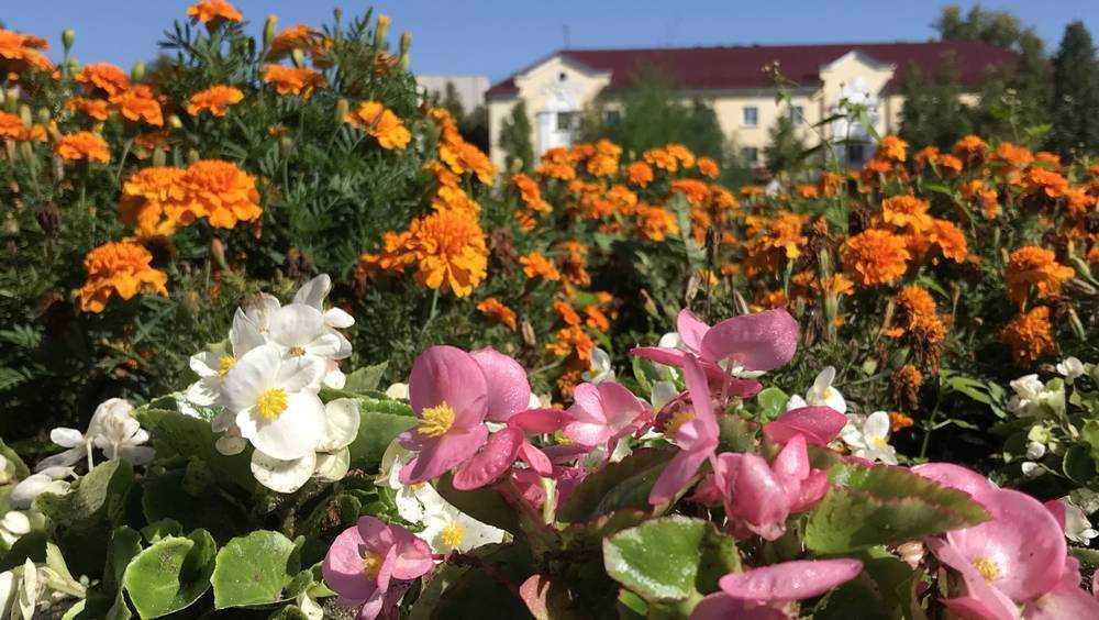 Лето в Брянской области задержится на 2 недели