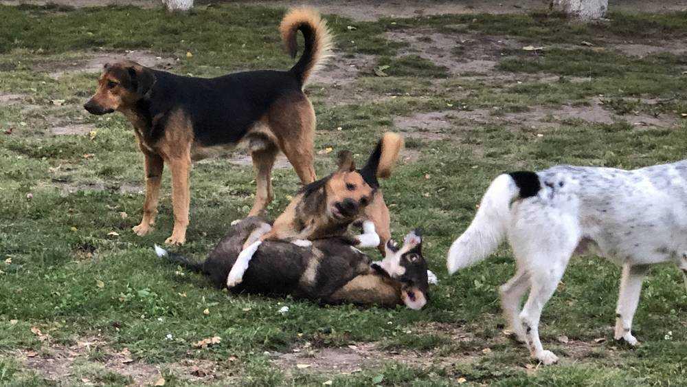 В Брянске следователи проверят обстоятельства нападения собаки на семью