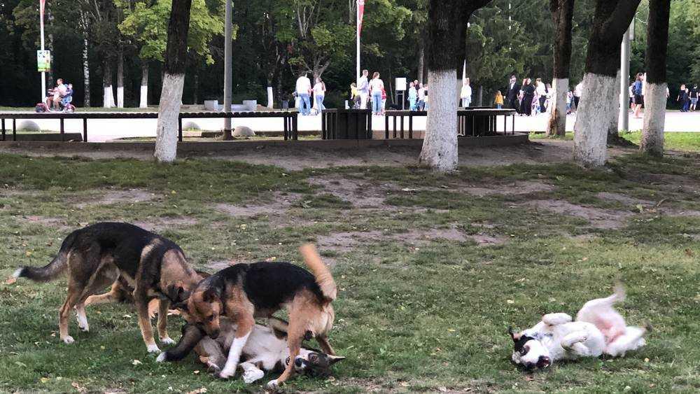 В Брянске бродячие псы прибрали к лапам часть парка «Соловьи»