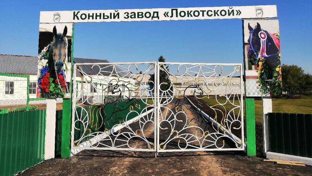 Ворота Локотского конезавода украсили фото элитных жеребцов