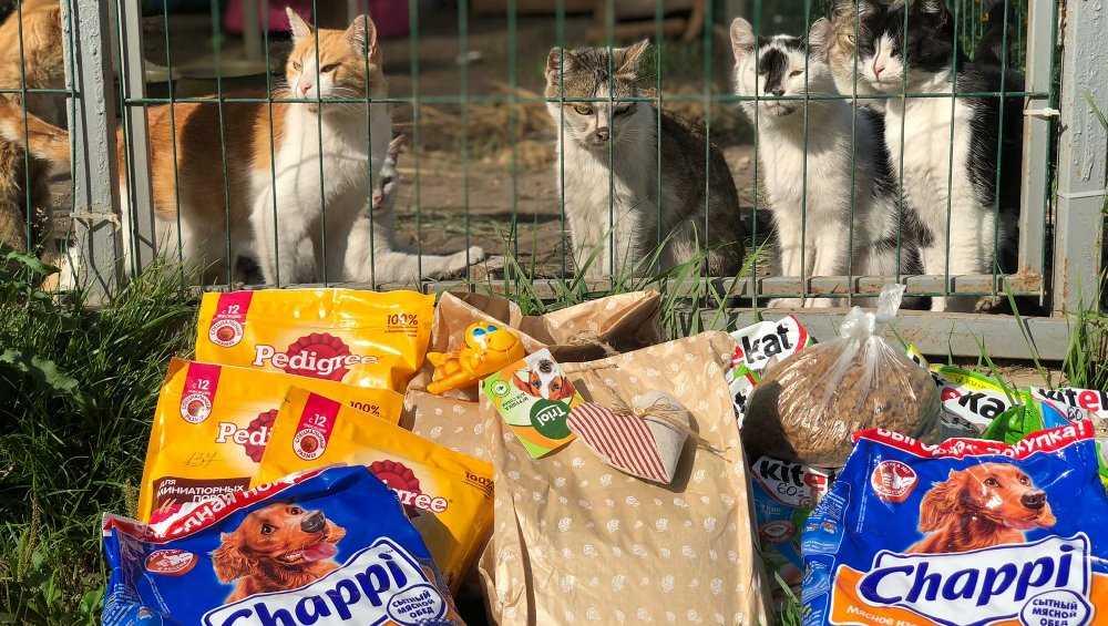 Брянские молодожены вместо цветов попросили подарить им корм для кошек
