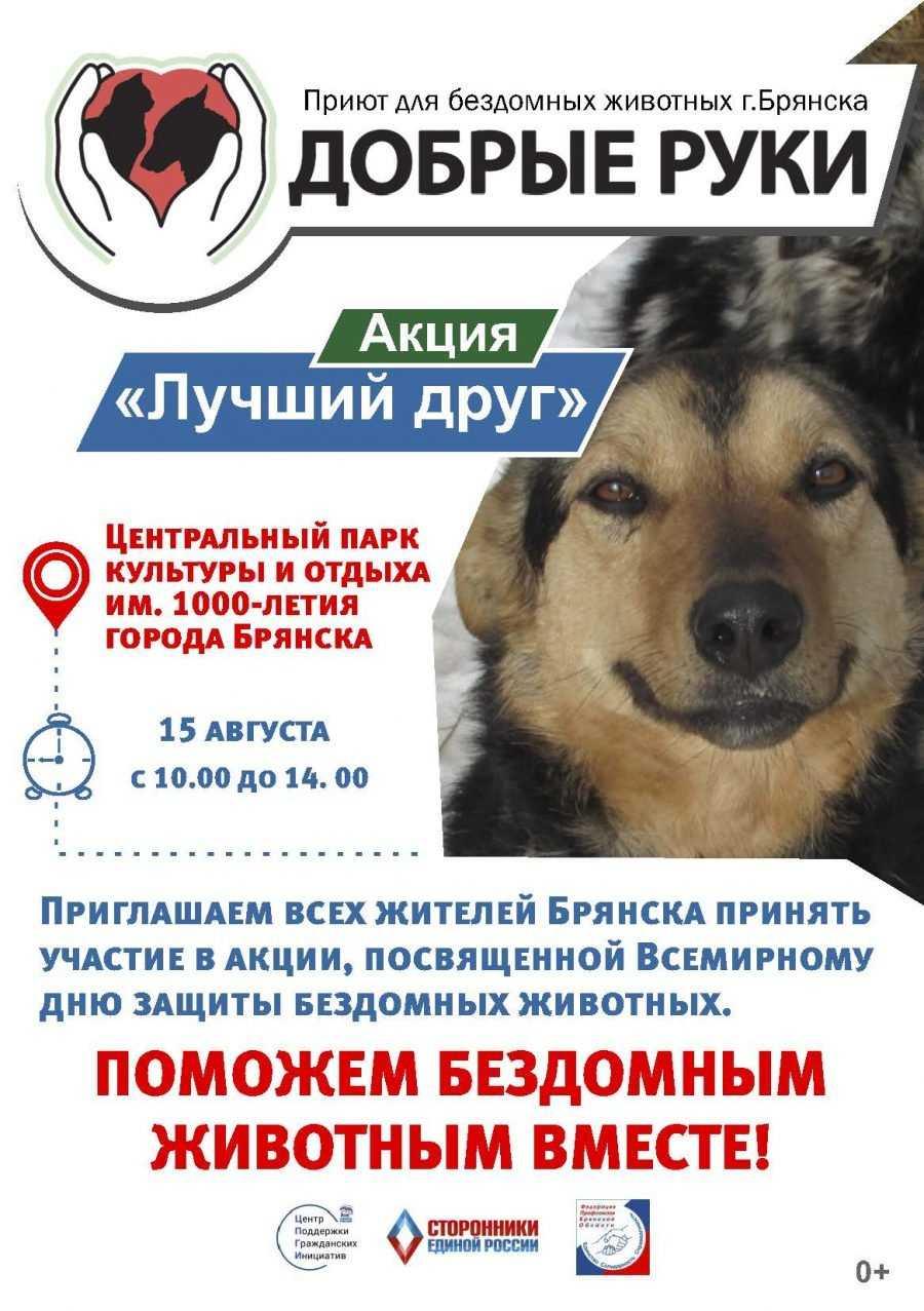 Ольга Полякова: Мы бы хотели привлечь внимание общественности к проблемам бездомных животных