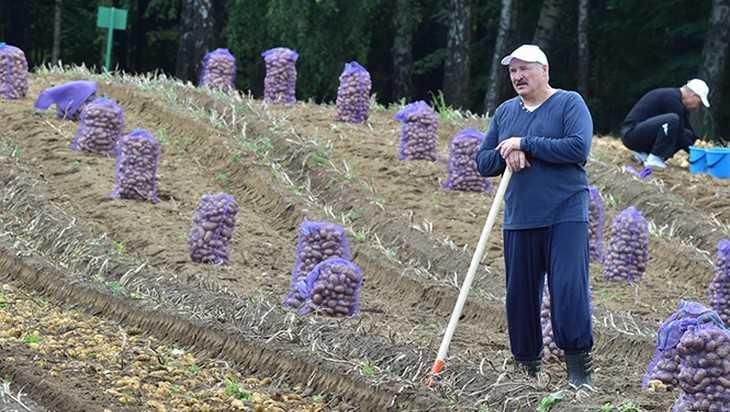 Лукашенко и КГБ попались на удочку подчиненных Зеленского из СБУ