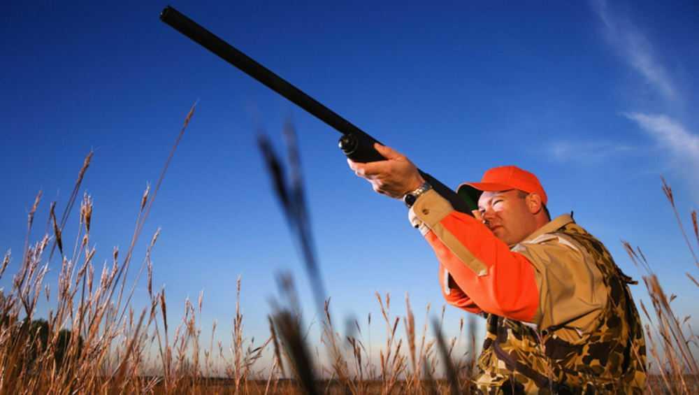 В Брянской области сезон охоты откроют 8 августа