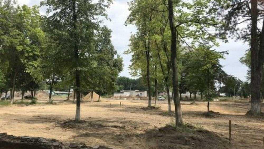 В Клинцах чиновники запутались с рубкой деревьев в парке