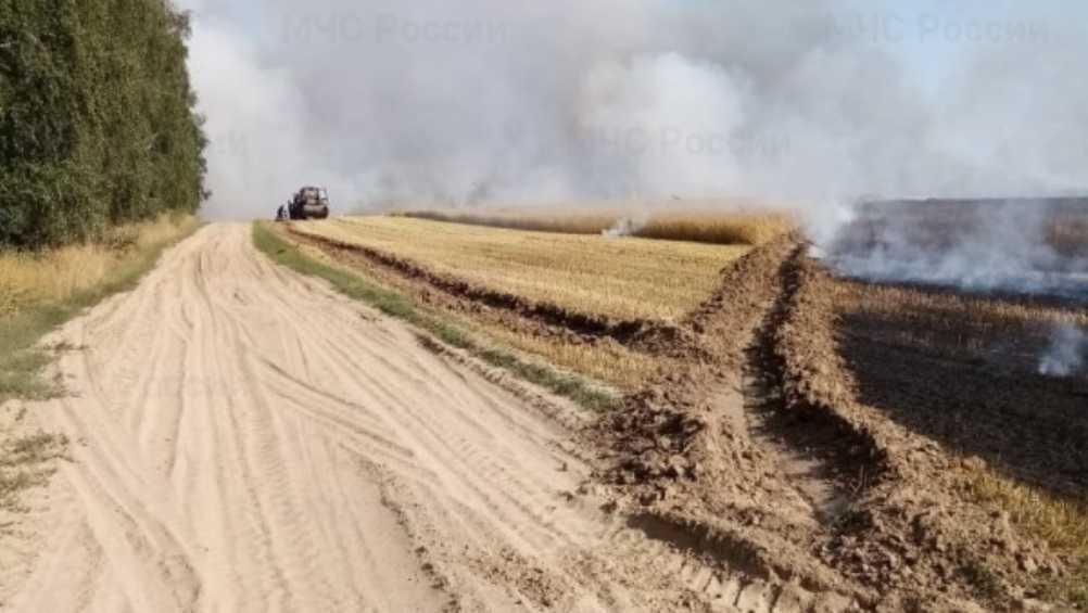 Под Климовом Брянской области сгорел 41 гектар пшеницы
