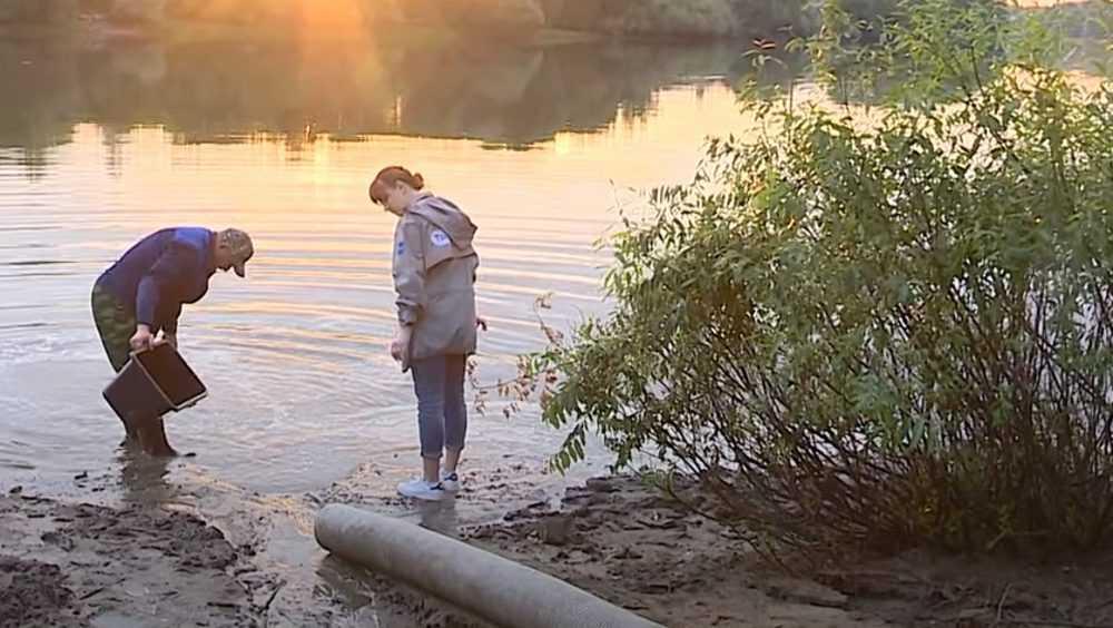 Более 16 тысяч мальков сазана в Брянске выпустили в Десну