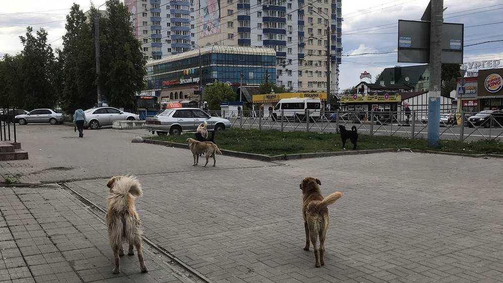 Проект приюта для бездомных животных появится в Брянске к декабрю