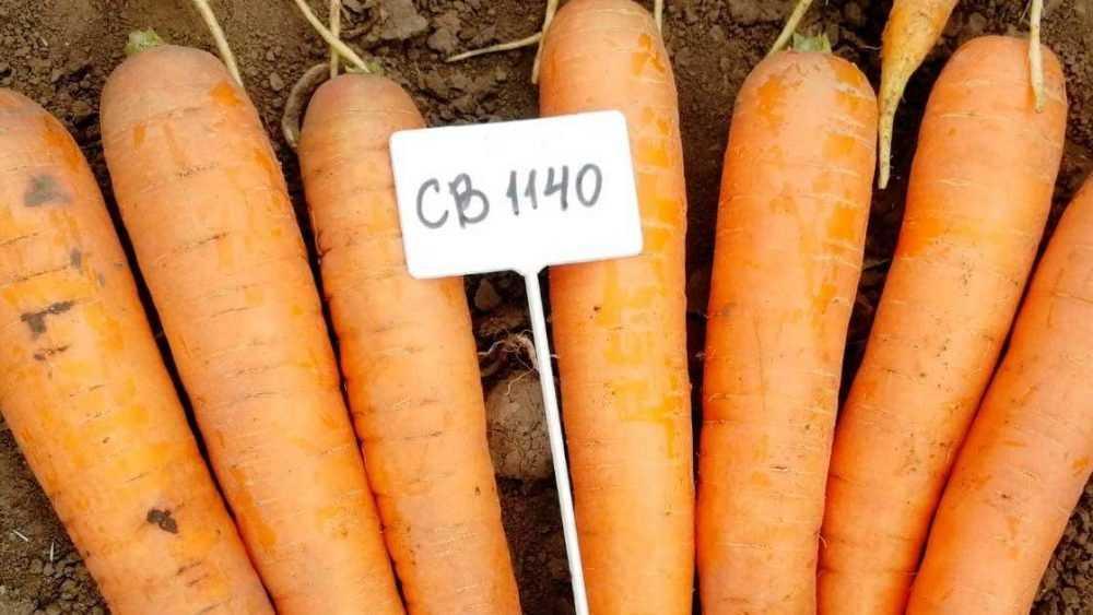 Причины выбрать семена овощей в профессиональной упаковке